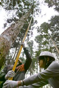 樹高測定2